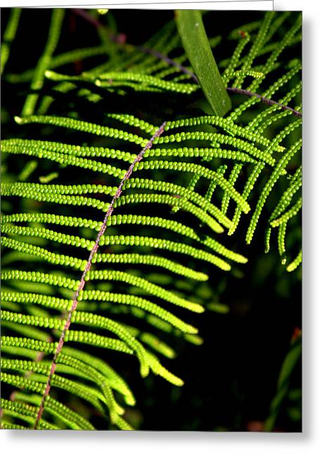 Greeting Card featuring the photograph Pauched Coral Fern by Miroslava Jurcik