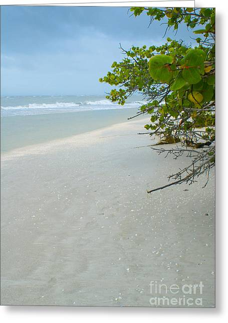 Peace And Quiet On Sanibel Island Greeting Card