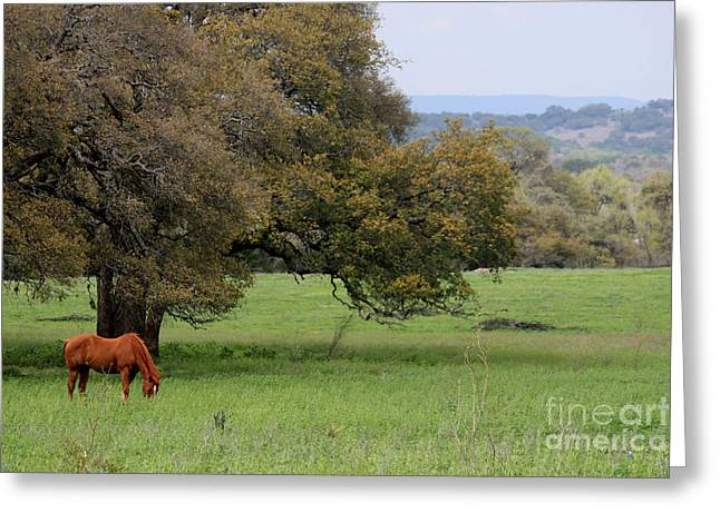 Peace In The Hill Country Greeting Card