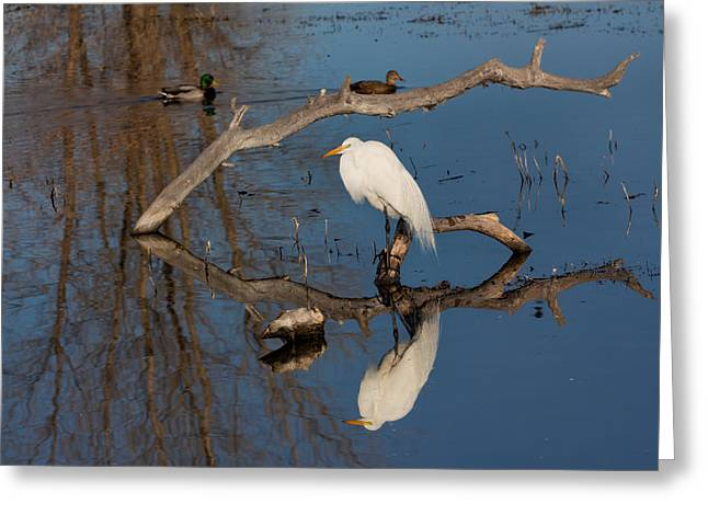 Peace In The Swamp Greeting Card