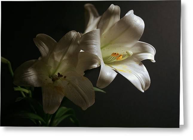 Greeting Card featuring the photograph Peace Lily by Cathy Harper