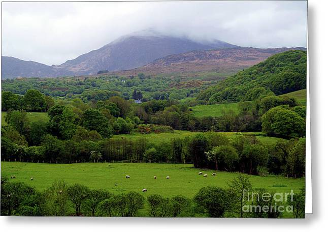 Peace On The Emerald Isle Greeting Card by Patricia Griffin Brett