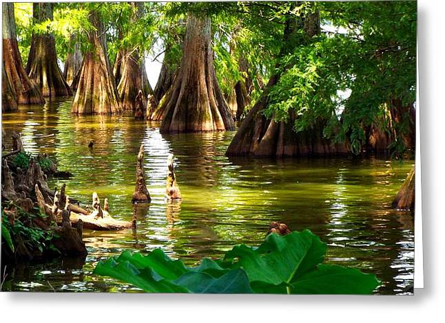Peaceful Cypress Trees  Greeting Card by Cindy Croal