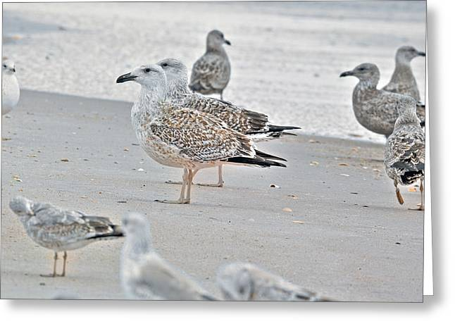 Peaceful Gulls Greeting Card by Betsy Knapp