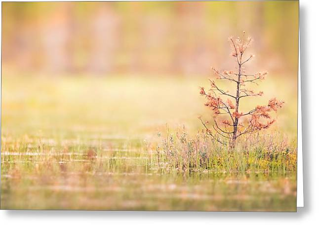 Peaceful Greeting Card by Janne Mankinen
