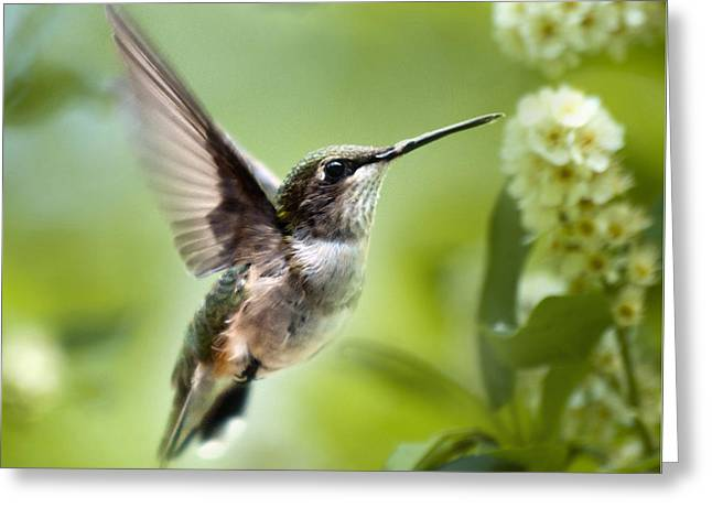 Peaceful Love Hummingbird Square Greeting Card by Christina Rollo