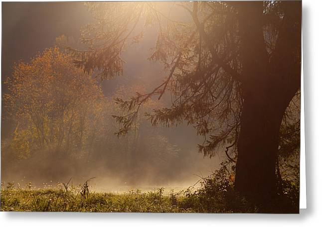 Peaceful Moments Greeting Card by Karol Livote