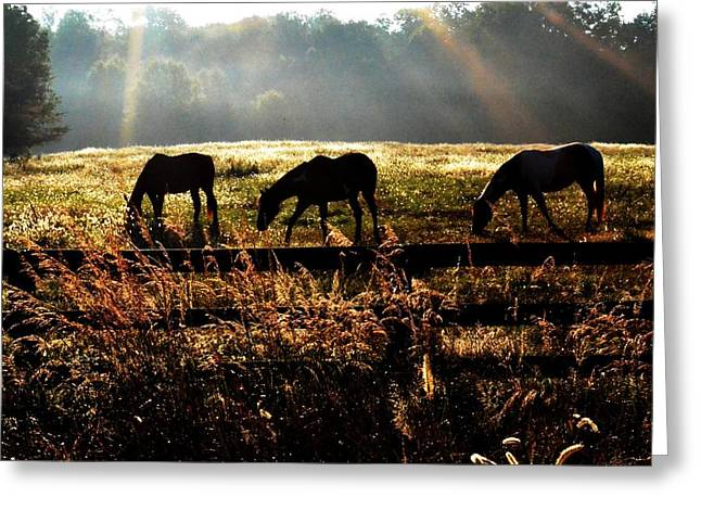 Greeting Card featuring the photograph Peaceful Pasture by Carlee Ojeda