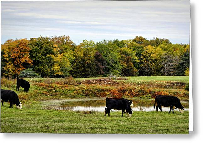 Peaceful Pastures Greeting Card by Cricket Hackmann
