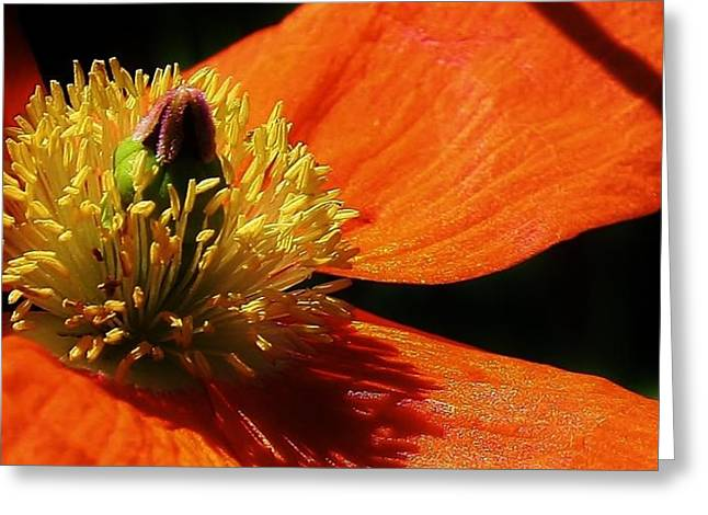 Peaceful Poppy Greeting Card by Bruce Bley