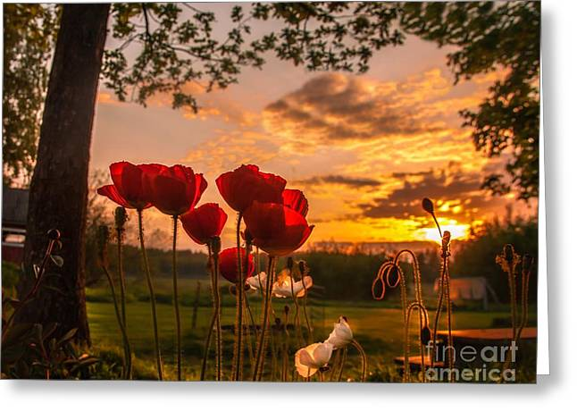Peaceful Poppy Greeting Card by Rose-Maries Pictures