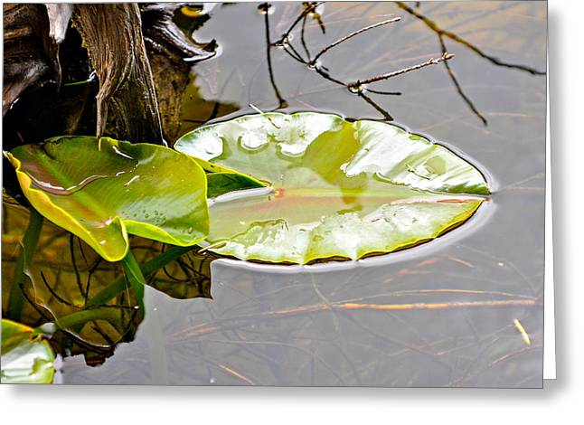 Peaceful Reflections  Greeting Card by Roxy Hurtubise