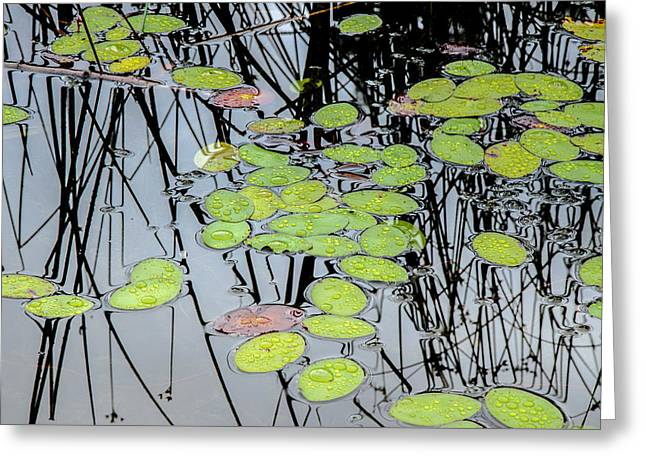 Natural Reflections Greeting Card by Roxy Hurtubise