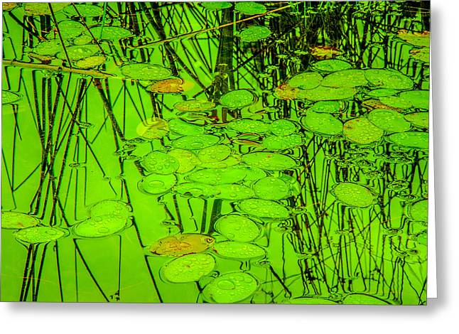 Lily Pads And Reed Reflections Greeting Card by Roxy Hurtubise