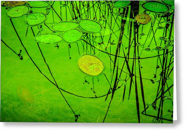 Peaceful Reflections In Green Greeting Card by Roxy Hurtubise
