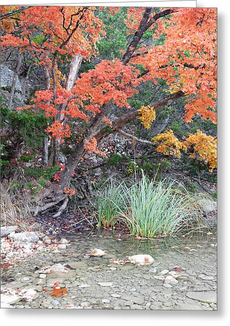 Peaceful Retreat Lost Maples Texas Hill Country Greeting Card by Silvio Ligutti