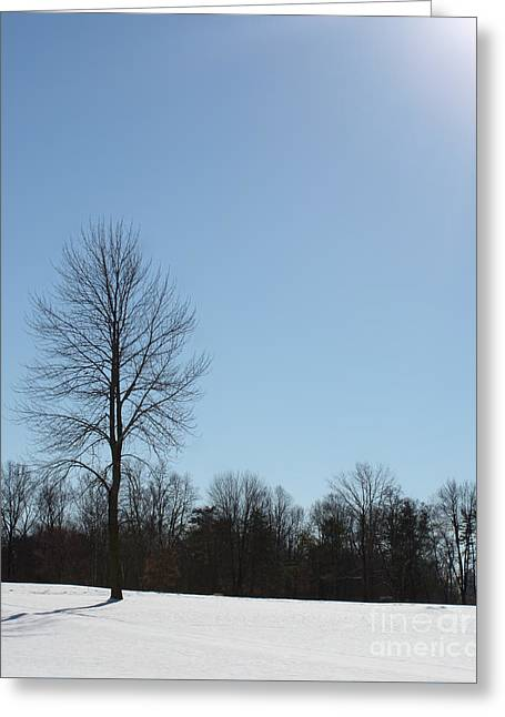 Greeting Card featuring the photograph Peaceful Winter Scene by Anita Oakley