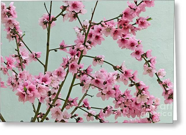 Peach Blossom 1 Greeting Card by Rod Jones