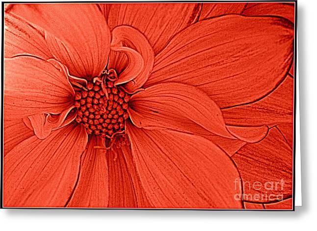 Peach Blossom Greeting Card by Dora Sofia Caputo Photographic Design and Fine Art