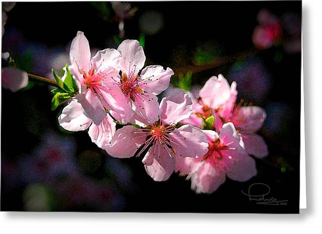 Greeting Card featuring the photograph Peach Blossoms by Ludwig Keck