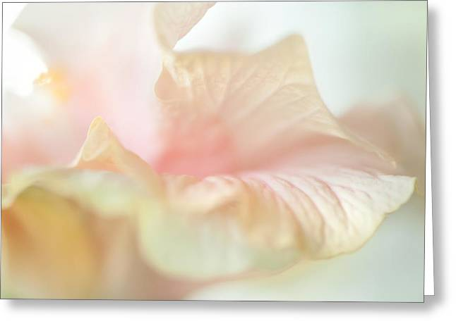 Peach Delicacy. Hibiscus Macro Greeting Card by Jenny Rainbow