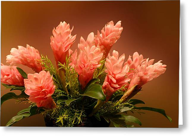 Peach Gibger Blossoms Greeting Card by Linda Phelps