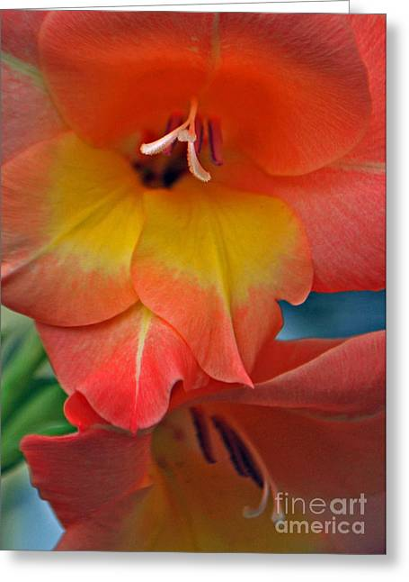 Peach Glads  Greeting Card