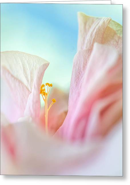 Peach Hibiscus. Macro Greeting Card by Jenny Rainbow
