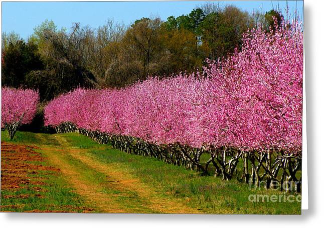 Greeting Card featuring the photograph Peach Orchard In Carolina by Lydia Holly