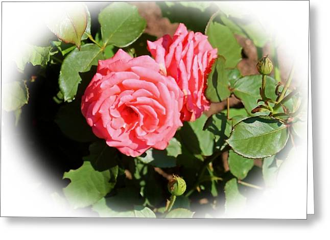 Peach Rose Greeting Card by Victoria Sheldon