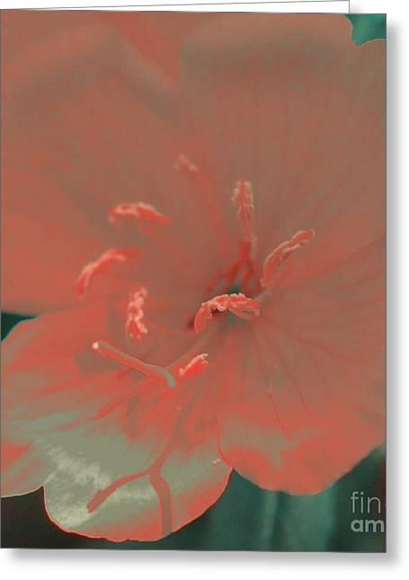 Peach Silk Greeting Card by Kathleen Struckle