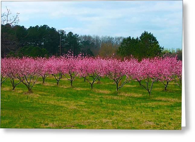 Peach Tree Grove By Jan Marvin Greeting Card