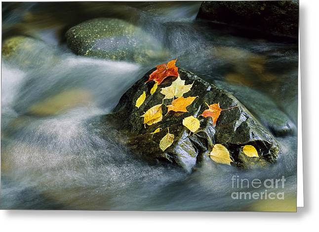 Greeting Card featuring the photograph Peacham Brook In Fall by Alan L Graham