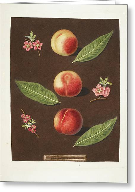Peaches Greeting Card by British Library