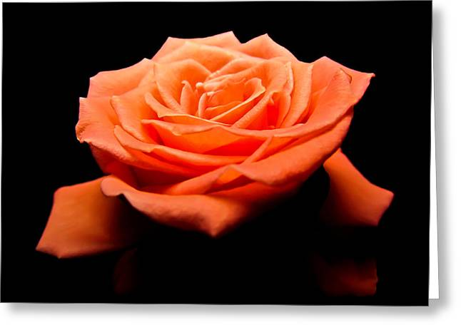 Peachy Rose II Greeting Card