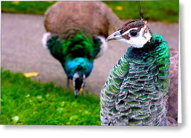 Peacock 4 Greeting Card by Izabela Bienko
