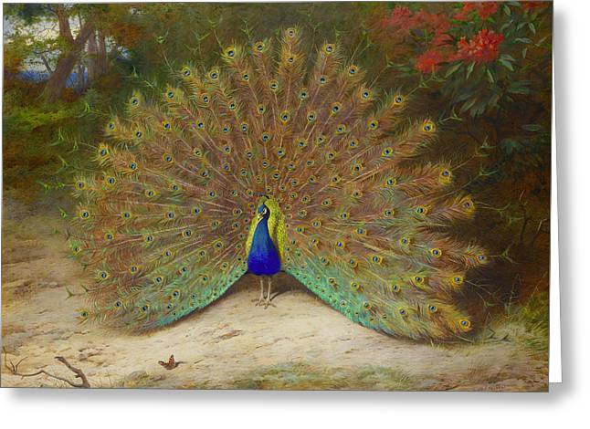 Peacock And Peacock Butterfly Greeting Card by Archibald Thorburn