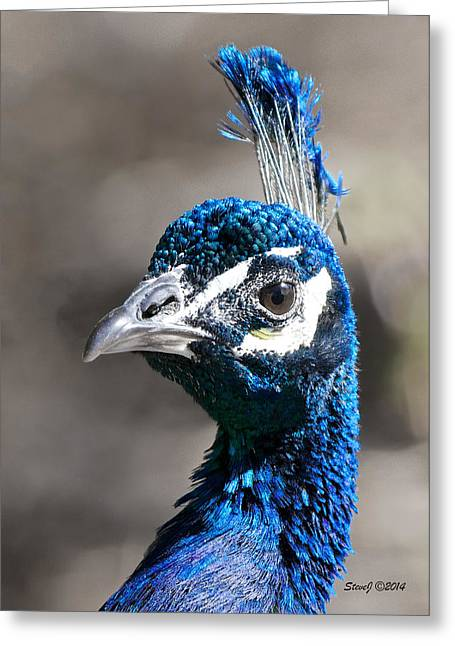 Peacock Blue Greeting Card by Stephen  Johnson