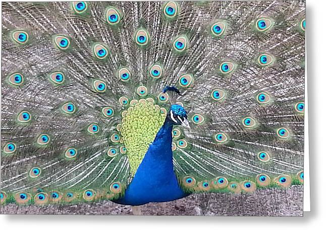 Greeting Card featuring the photograph Peacock by Caryl J Bohn