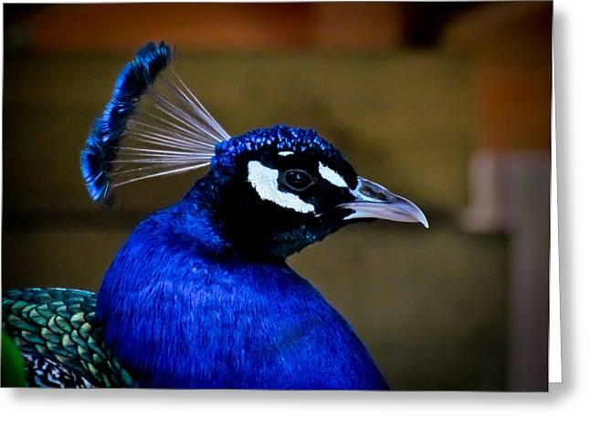 Peacock Greeting Card by Eva Kondzialkiewicz