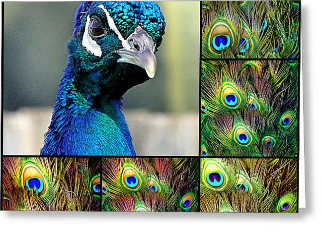 Peacock Eye Greeting Card
