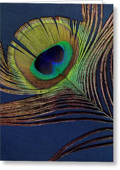 Peacock Feather Greeting Card