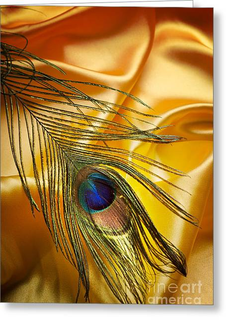 Peacock Feather Greeting Card by Jelena Jovanovic
