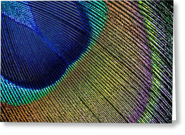 Peacock Feather Macro Greeting Card by Adam Romanowicz