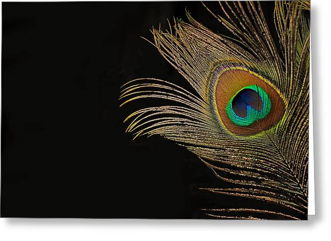 Peacock Feather Still Life Greeting Card