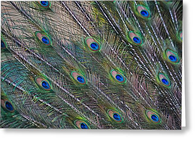 Peacock Feathers Abstract Greeting Card by Eti Reid