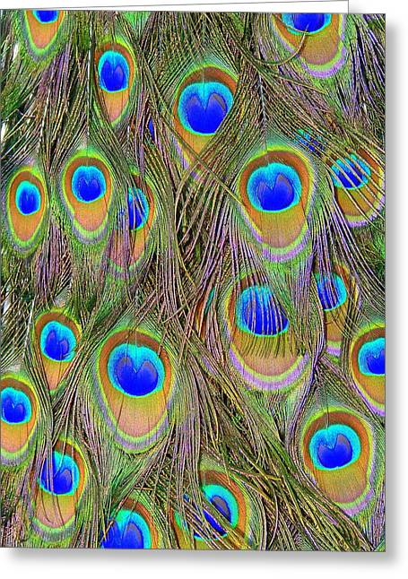 Peacock Feathers Greeting Card by Ramona Johnston