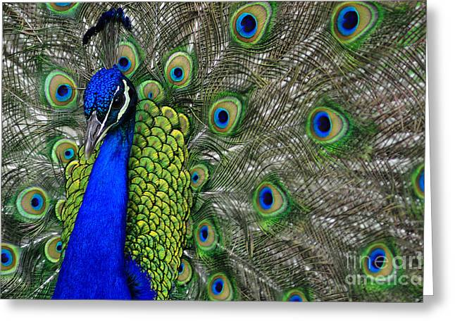 Peacock Head Greeting Card by Debby Pueschel