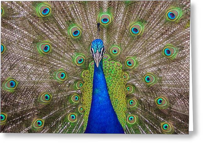 Greeting Card featuring the photograph Peacock by Leigh Anne Meeks