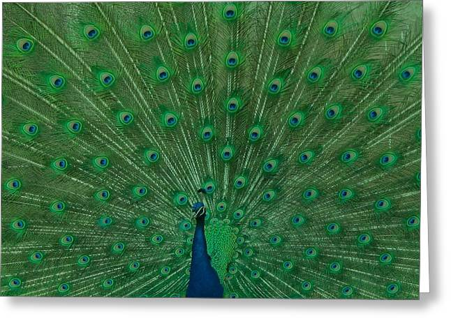 Peacock Greeting Card by Art Spectrum